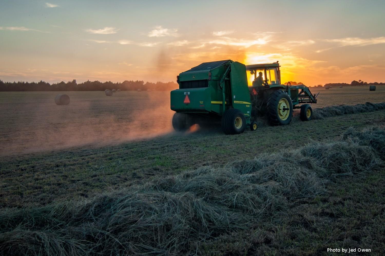 Виробництво сільськогосподарської продукції впало на 13,1% 1